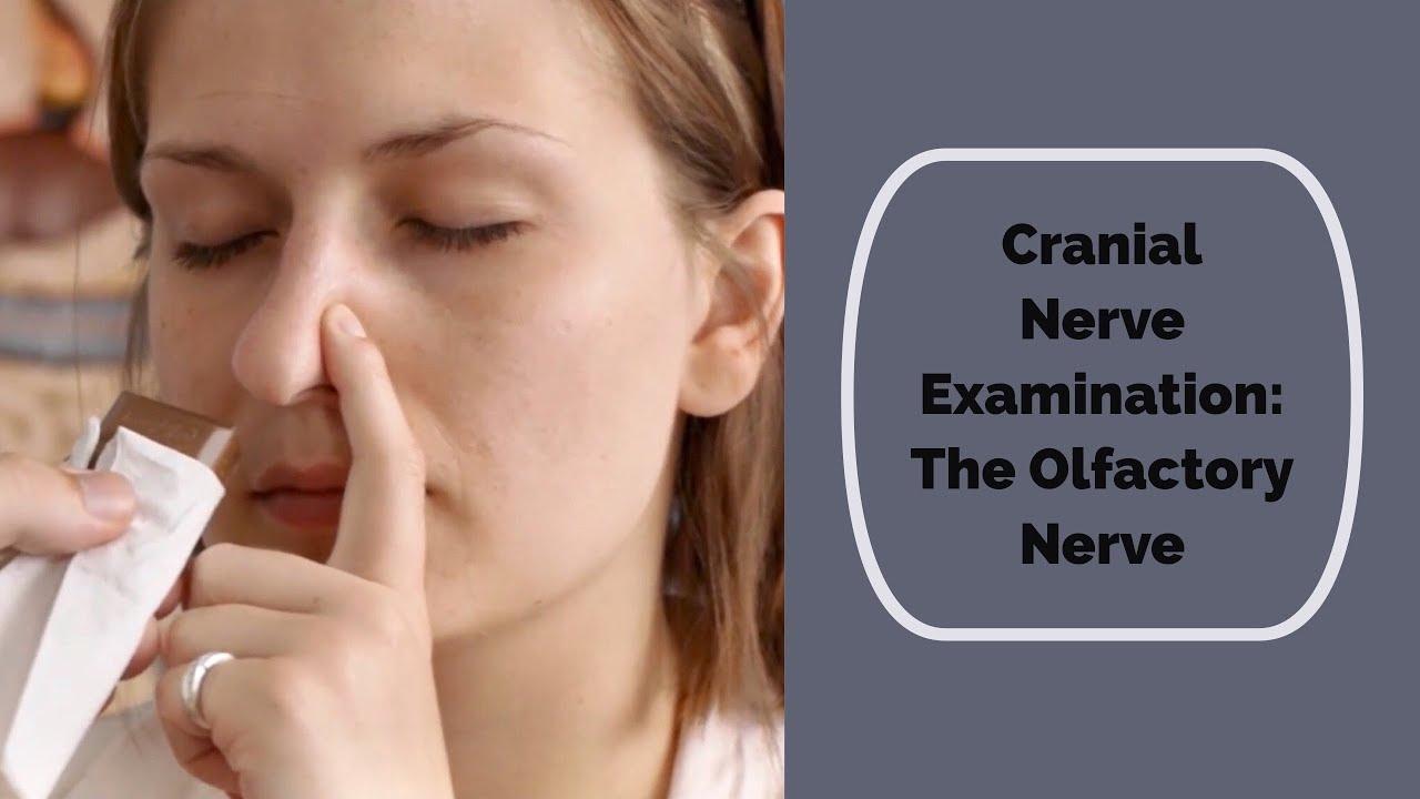 Cranial Nerve Examination  Cn 1 Olfactory Nerve