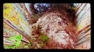 Mysterious Giant Humanoid Skull discovered in Puerto Vallarta, 2018