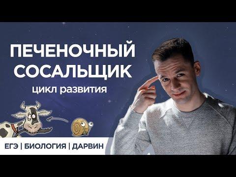 Печеночный сосальщик | ЕГЭ Биология | Даниил Дарвин