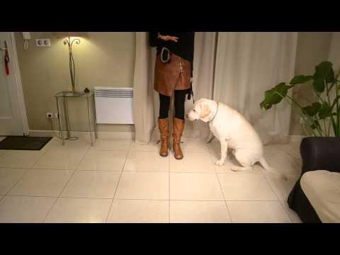 Comment apprendre à votre chien à marcher au pied | Doovi
