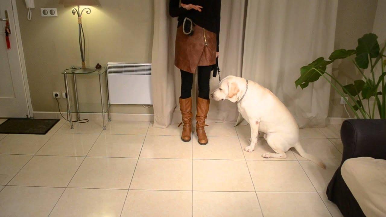Dresser son chien : Comment apprendre à son chien à