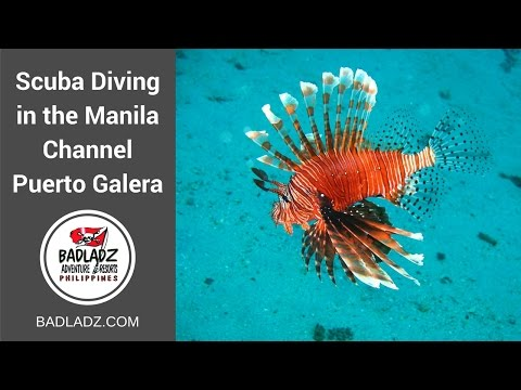 Philippines Scuba Diving in the Manila Channel