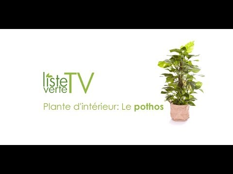 plante d 39 int rieur le pothos youtube. Black Bedroom Furniture Sets. Home Design Ideas