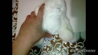 Обзор на игрушку кролик из натурального меха