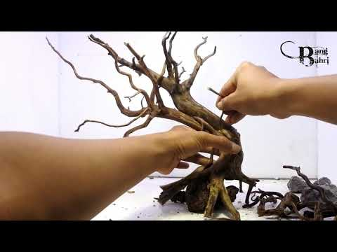 membuat-bonsai-aquascape-sederhana-#3