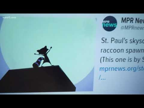 Digital Dive: You can now buy MPR raccoon swag