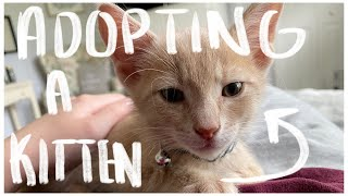 ADOPTING A KITTEN | What you should know BEFORE adopting