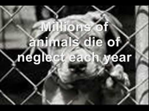 animal cruelty facts
