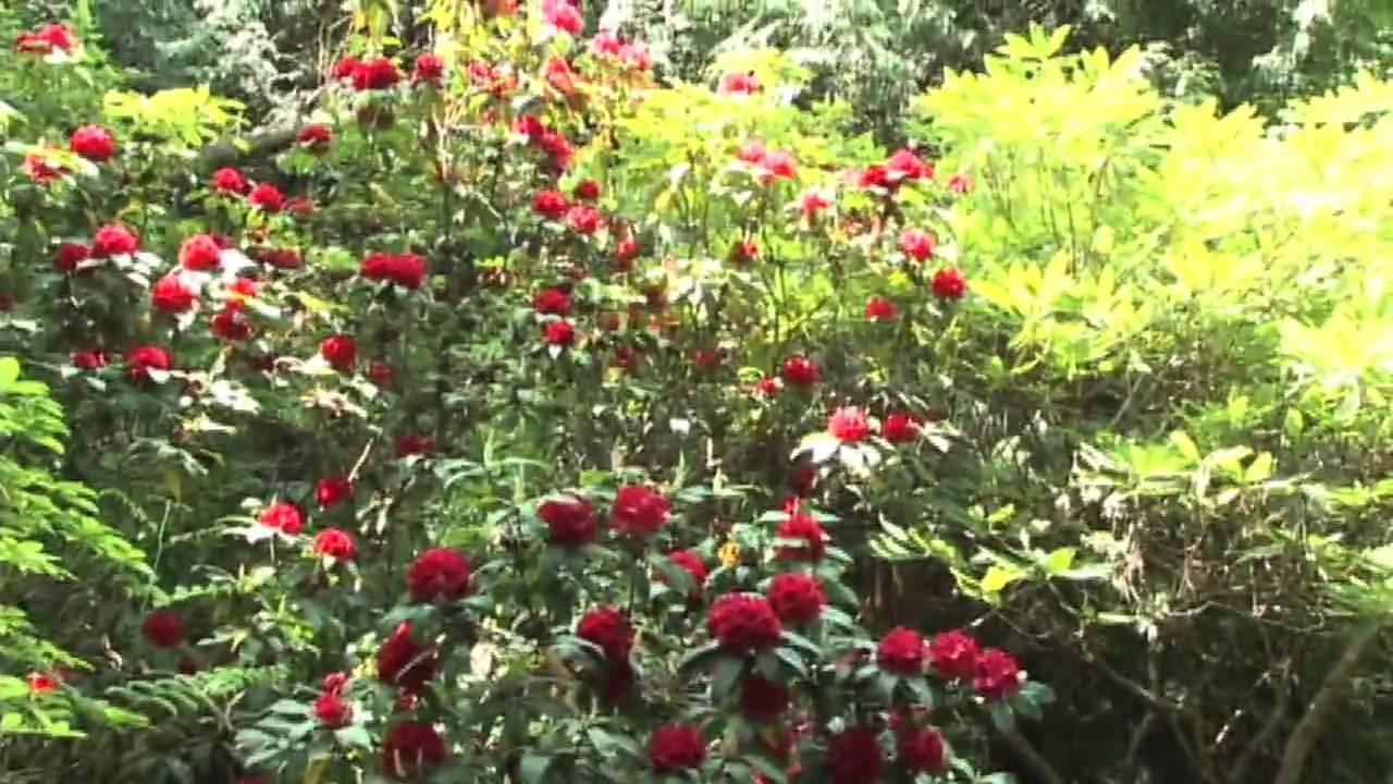 Milner Gardens - YouTube
