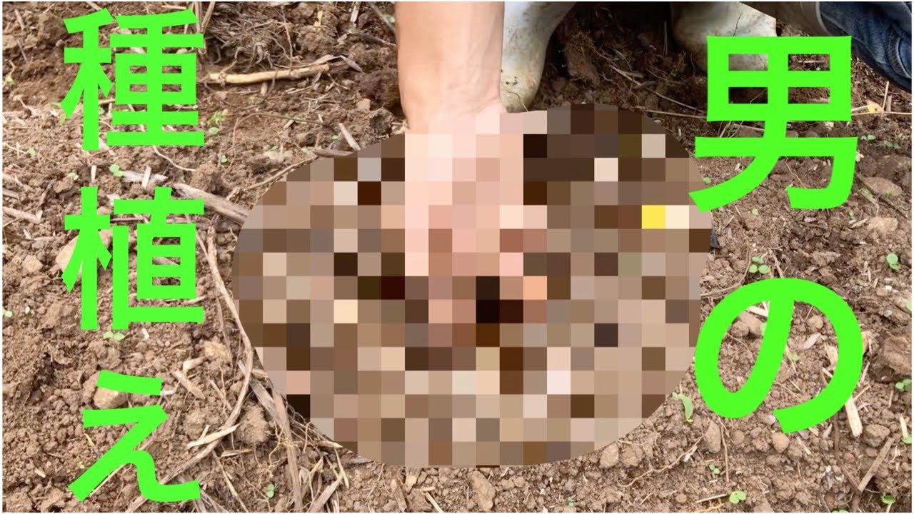 【離島生活】自家栽培 初めての種蒔き My first experience of sowing seeds.