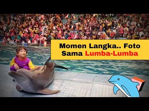 momen-terbaik-di-taman-safari-indonsesia-ii-pegang-lumba-lumba-tkm-tarbiyatul-waton-gresik
