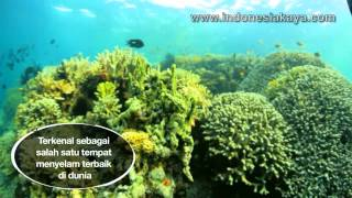 Download Video Taman Nasional Bunaken MP3 3GP MP4