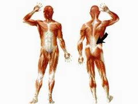 how the body works : skeletal muscles - youtube, Muscles