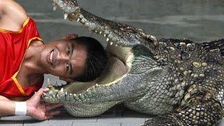 Шоу крокодилов - Крокодиловая ферма в паттайе