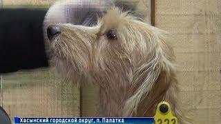 Открыт первый на Колыме муниципальный приют для безнадзорных животных