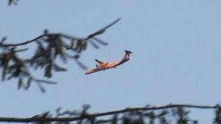 Stolen Plane From Seatac Horizon Alaska Q400 - F15's Scramble! 08.10.18
