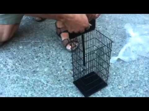Probando la jaula trampa en casa de antonio otra vez doovi - Cepos para ratones ...
