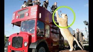 Dangerous Jungle Cats