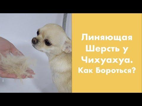 Вопрос: Как сделать так, чтобы шерсть собаки блестела?