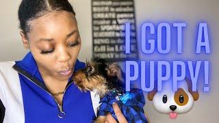 I GOT A PUPPY | YORKIE PUPPY HAUL