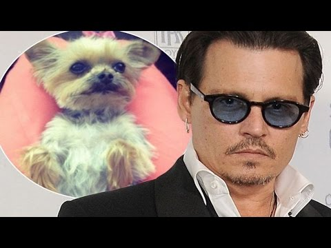 Johnny Depp Flies His Dogs In Private Jet To Save Their Lives