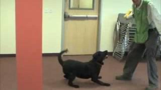*Adopted* Jax 7048853 Boulder Humane Society Adopt