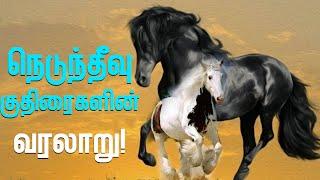 Delft Island Horses நெடுந்தீவு குதிரைகளின் வரலாறு!