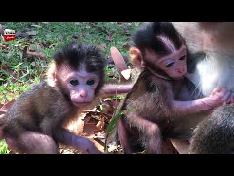 What these are two new born baby? They are so cute/Lovely Monkeys Youlike Monkey 1576