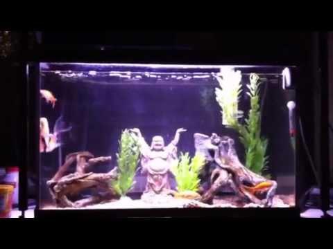 Zen buddha goldfish aquarium youtube for Decoration zen aquarium