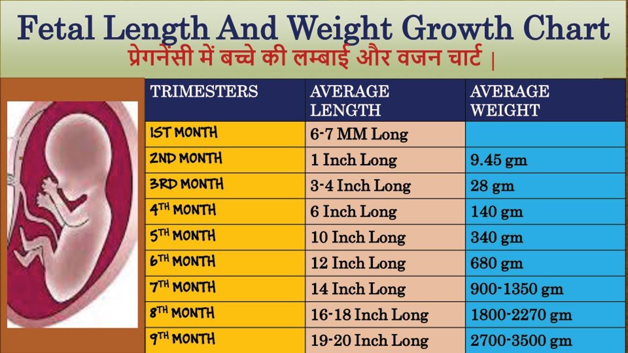Fetal Length And Weight Growth Chart   प्रेगनेंसी में ...