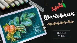 · Скетчинг спиртовыми маркерами · Рисуем шиповник · Видеоурок ·