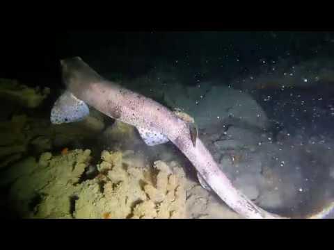 Caroni River Wreck Scuba Dive 05 01 2019