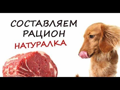 Моя собака. Составляем рацион. Натуральные продукты.