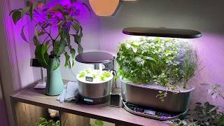 AergoGarden & Hydroponics  Day 77 Review & Time Lapse