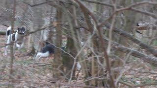 Стая бродячих собак в Ульяновском лесопарке