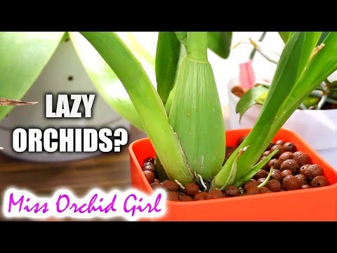 Orchids taking a year to start root growth?
