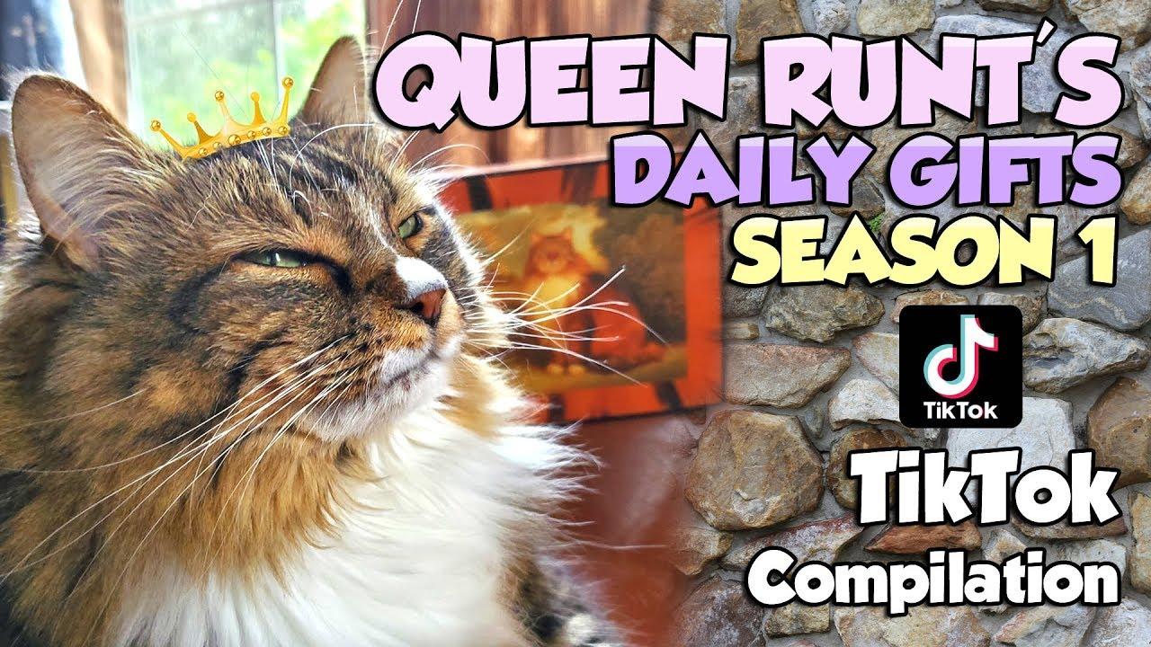 Sushi and Runt's Cat and Dog Blog !: 20,000 TikTok Followers