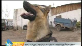Полицейской собаке вручили медаль в Боханском районе