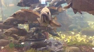 Bering wolffish, rockfish, barfin flounder (flatfish) 🐟