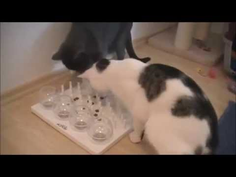 Das Cat Activity Fun Board