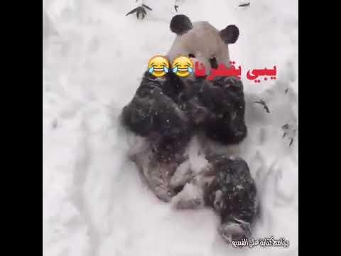 ههههه يبي يقهرنا   مضحك 2017