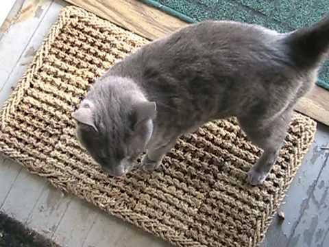 Gray The Cat