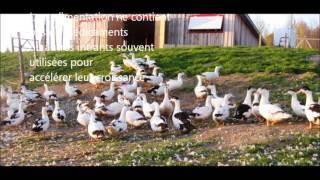 canard gouteux