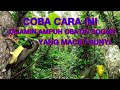 Suara Anakan Sogon Ontong  Mp3 - Mp4 Download