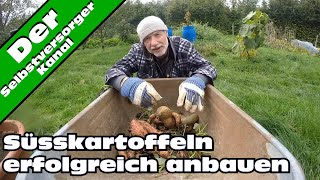 Süsskartoffeln erfolgreich im Garten anbauen