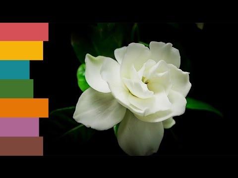 Как оформить заказ на нашем сайте:Sendholidays.com.uaиз YouTube · С высокой четкостью · Длительность: 4 мин38 с  · Просмотров: 84 · отправлено: 26.01.2014 · кем отправлено: Sendy Holidays