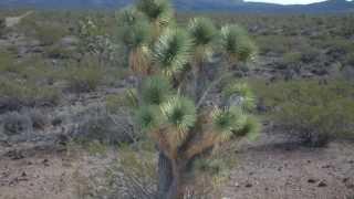 282-lot subdivision For Sale, White Hills, Arizona
