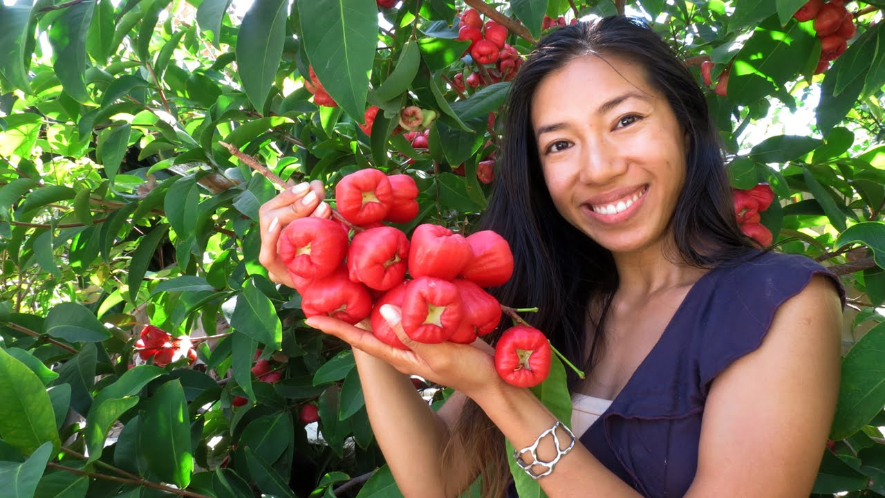Benefits Of Rose Apple Fruit