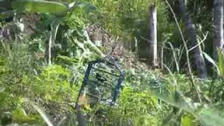 jebak burung (catching bird)
