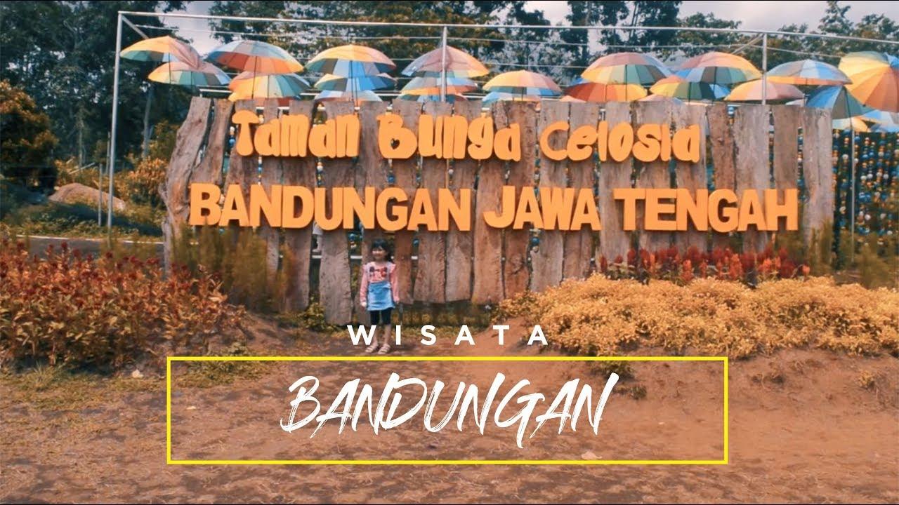 Wisata Taman Bunga Celosia Gedong Songo Bandungan Kab Semarang